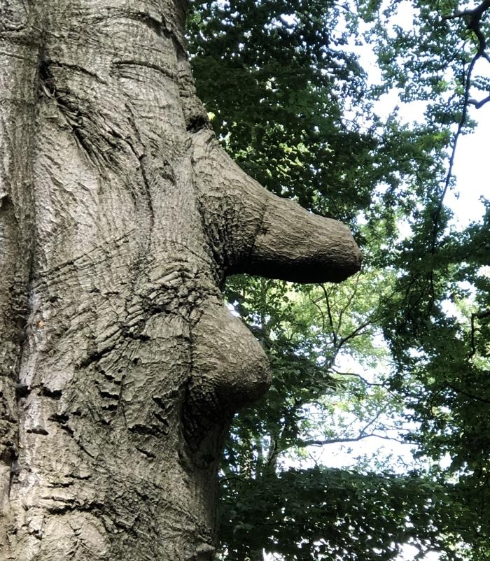 Creatief met bomen. Lijkt op Pinokkio  Hennie Prinsen © BDU media