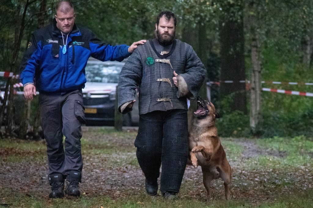 Een politiehond in training brengt een 'boef' op.  Demi Ekkel © BDU media