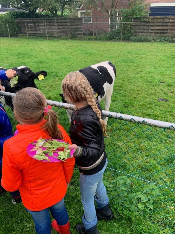 De dieren voeren Kinderboerderij De Vliert © BDU media