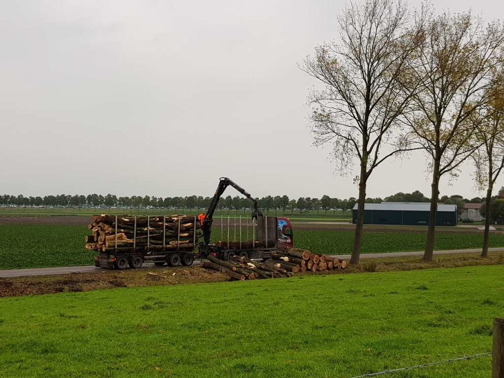 Bomenkap Weteringbrug.