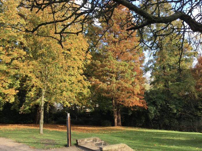Bomen in het Cantonspark Willy van Dijk-Doornenbal © BDU media