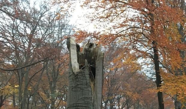 Bosgroep Midden Nederland © BDU