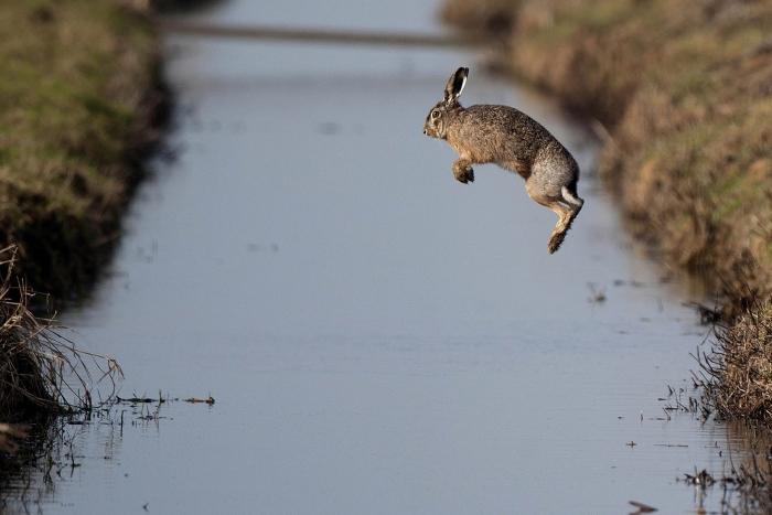 springende haas Arkemheen Henk Ruitenbeek © BDU Media