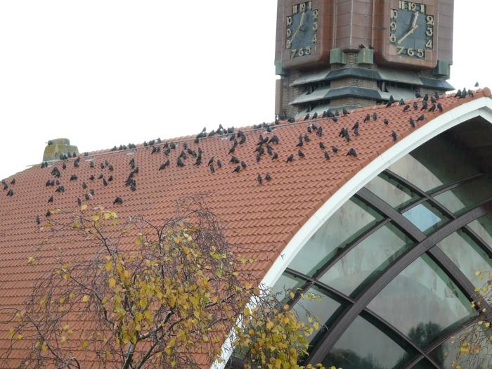 Kauwen OLV Kerk Halfweg