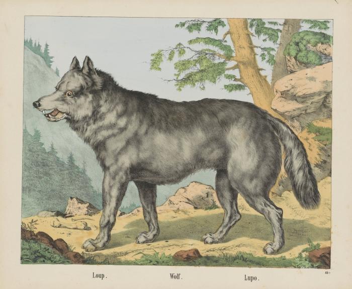 Prent, 18e eeuw (part. eigendom)