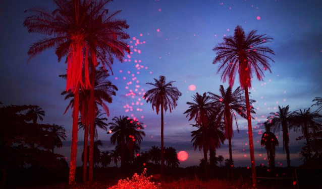 NIGERIA, Igbo-Ora, October 2018.Palmtree landscape at sundown. The flash lights up the bugs in the air. Igbo-Ora, the self proclaimed 'Twin Capital of the World' has earned its nickname by the unusually large number of twin births in the region. Research has suggested that the multiple births could