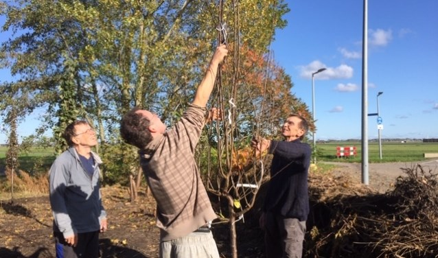 Weer een nieuwe fruitboom wordt geplant.
