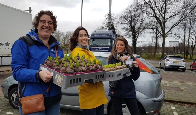 Bakken vol hyacinten huis-aan-huis verkocht door Soli.