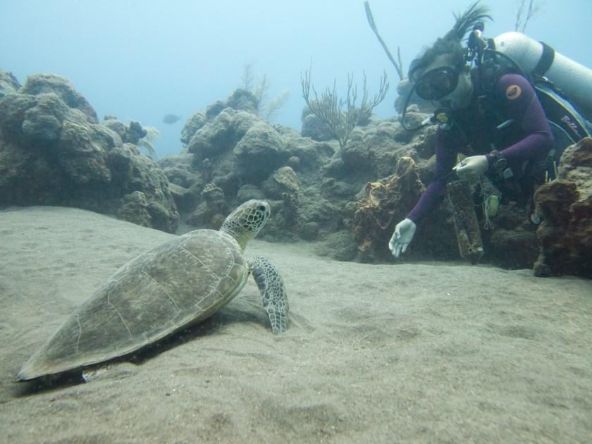 De Saba Bank is een beschermt natuurgebied met veel speciale dieren en planten. Ayumi duikt er vaak.