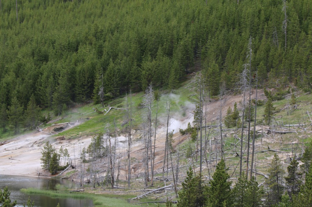 Yellowstone MART LENOIRE © BDU media