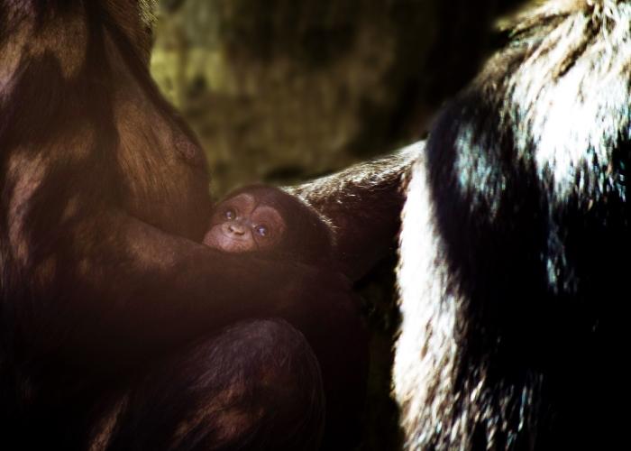Chura met jong DierenPark Amersfoort © BDU media