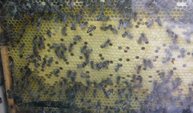 doorsnede bijenkast