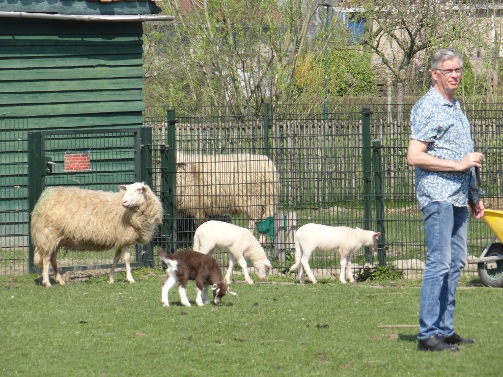 <p>Een aantal dieren is inmiddels van de kinderboerderij verhuisd naar elders</p>