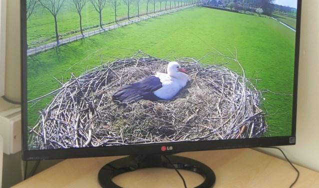 Op een groot scherm ziet Koppens het vrouwtje zitten die op 5 eieren zit te broeden.