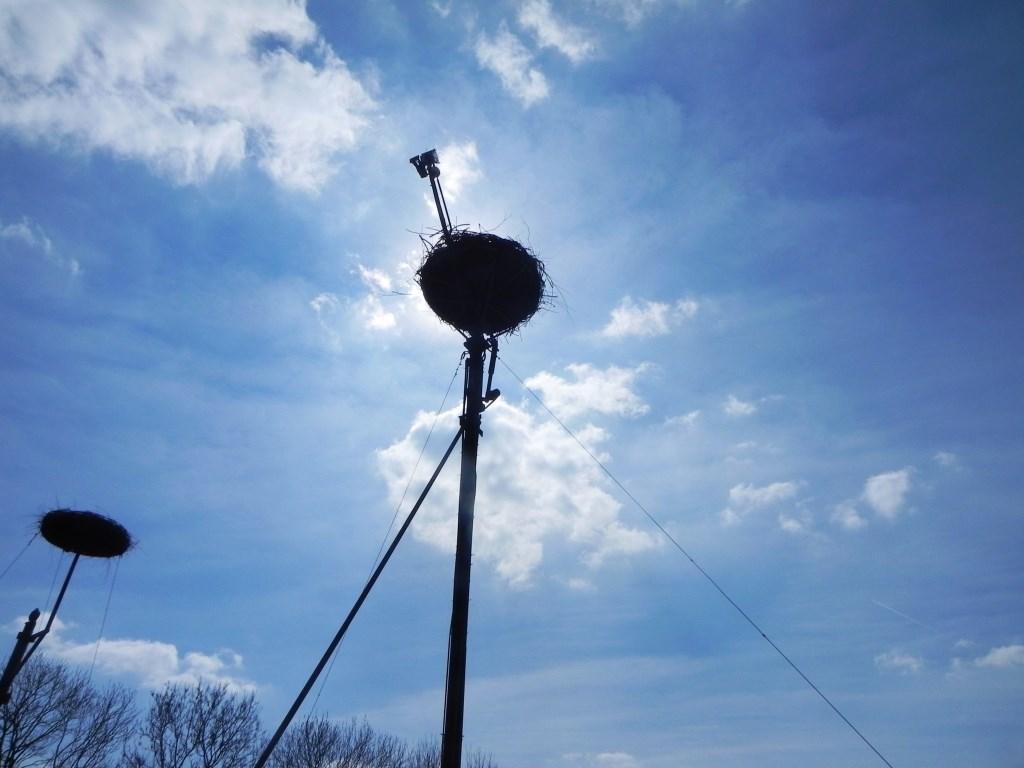 De webcam op het ooievaarsnest brengt het gebeuren 24 uur per dag in beeld. Richard Thoolen © BDU media