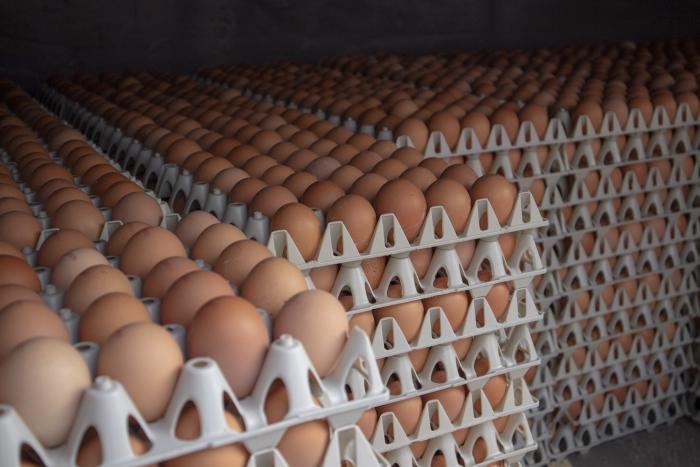 eieren eieren eieren Eigen afbeelding markt © BDU media