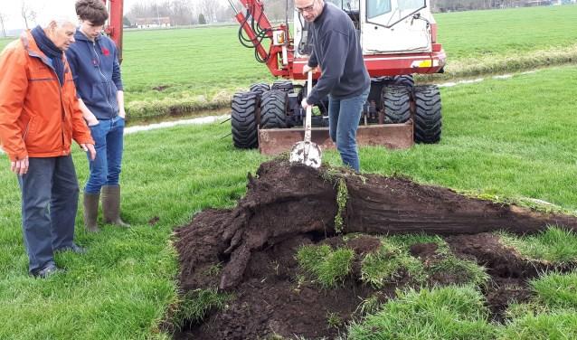 De werkgroep mocht aanwezig zijn het uitgraven van een drietal bomen, op het land van de Fam. De Nooij aan de Binnenweg.