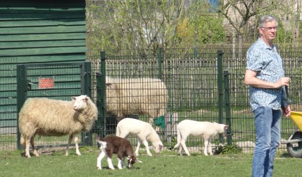 <p>7 schapen, 2 pony&rsquo;s, 7 geiten en een varken gaan de kinderboerderij verlaten. </p>