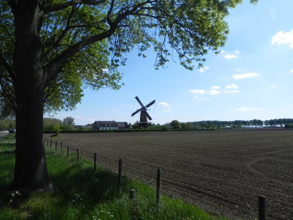 De karakteristieke molen is bepalend voor de skyline van Werkhoven. Richard Thoolen © BDU media