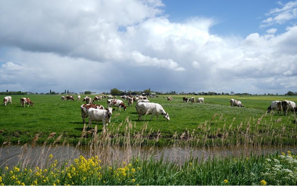Hier is het om te doen: bloeiende, groene polders.  Naomi Heidinga  © BDU media