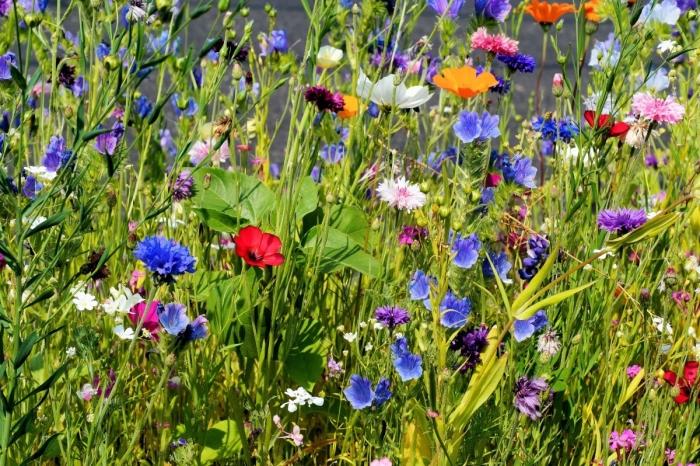 Bloemenweelde in jouw Heuvelrugtuin?