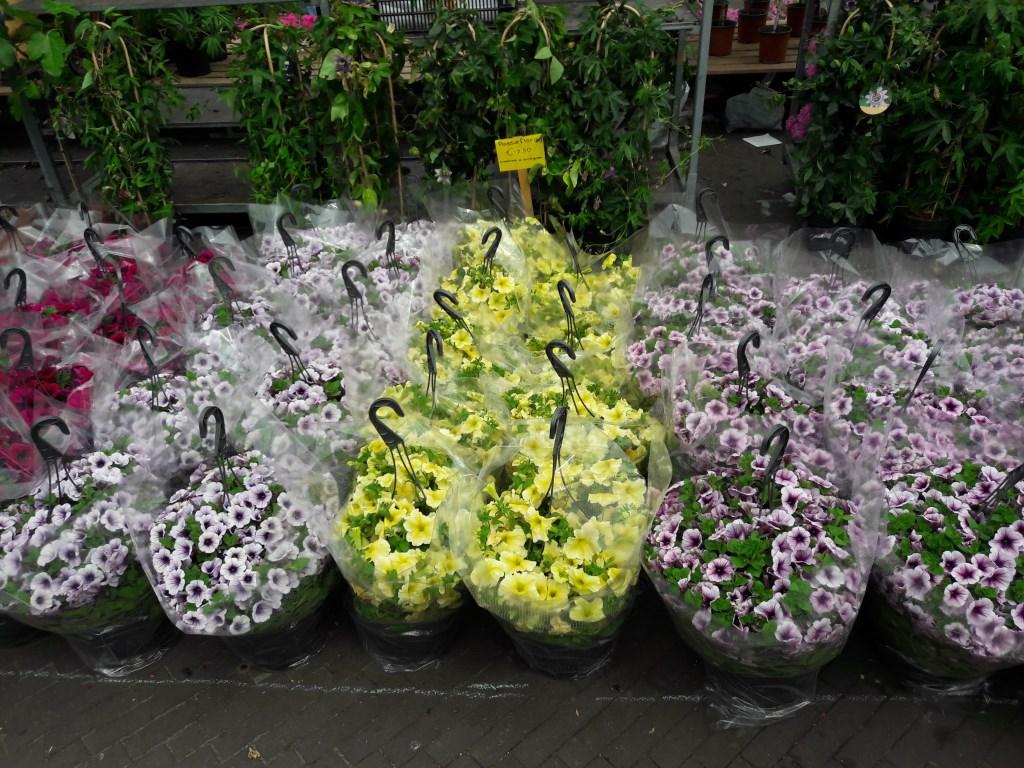 Bloemenmarkt op Het Rond TS © BDU media