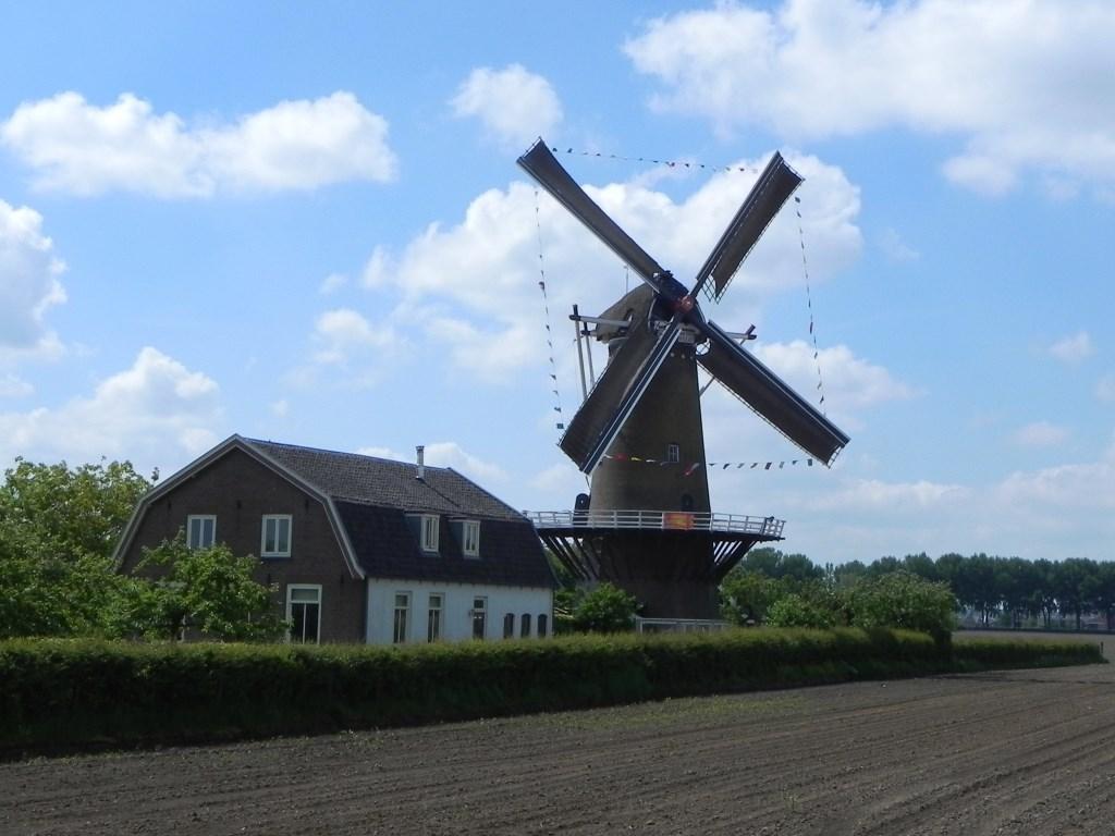 De molen Rijn en Weert staat fier te draaien in de wind.  Richard Thoolen © BDU media