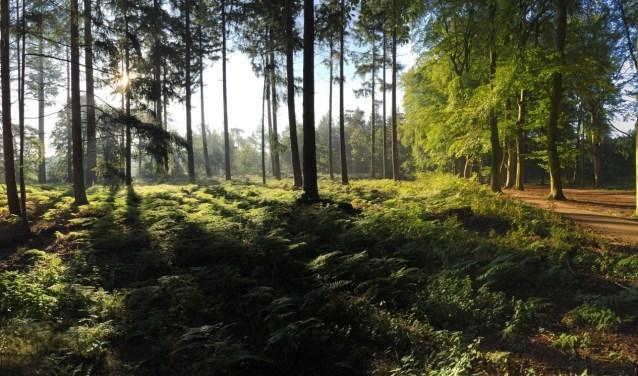 De bossen rond Lage Vuursche.