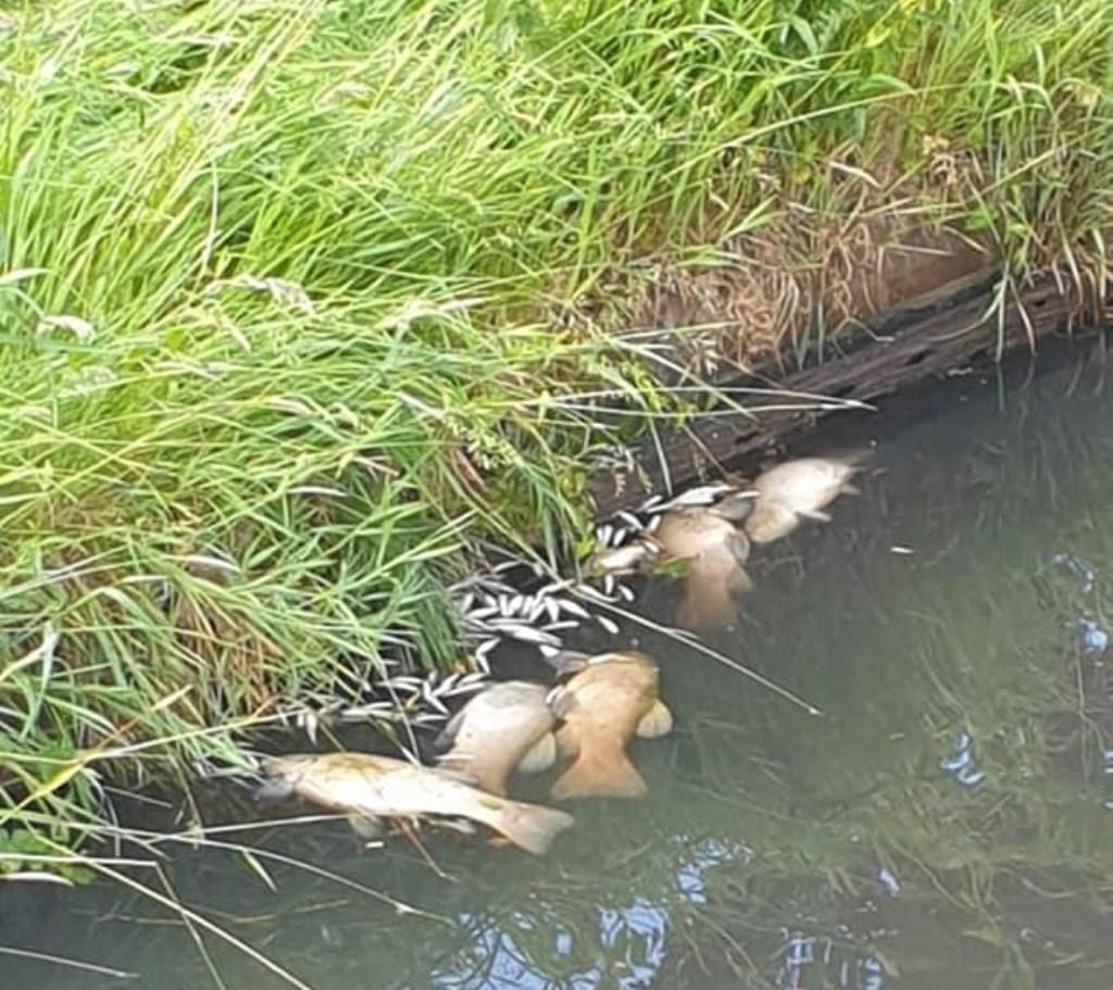 Vooral in de wijken Nieuwland en Schothorst waren veel dode vissen te zien.