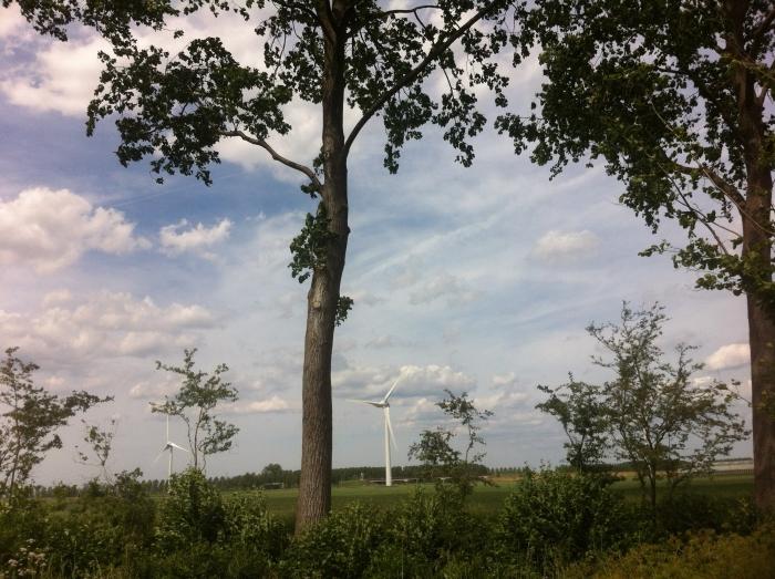Bomen en windmolens