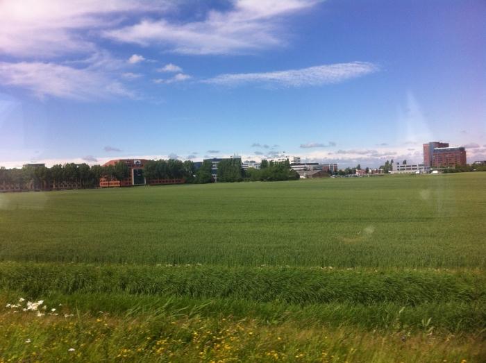 Groene akker met blauwe lucht