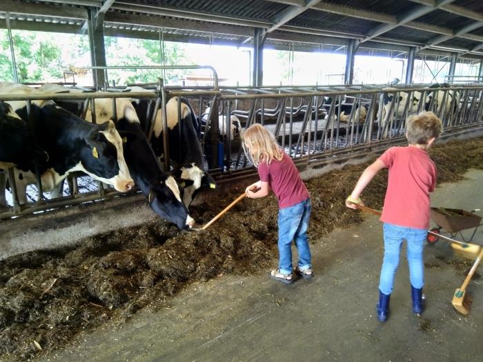 De boer helpen in de stal