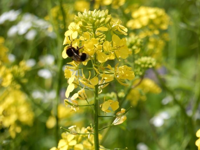 De bijen hebben de baan gevonden! Jolanda de Graaff © BDU media