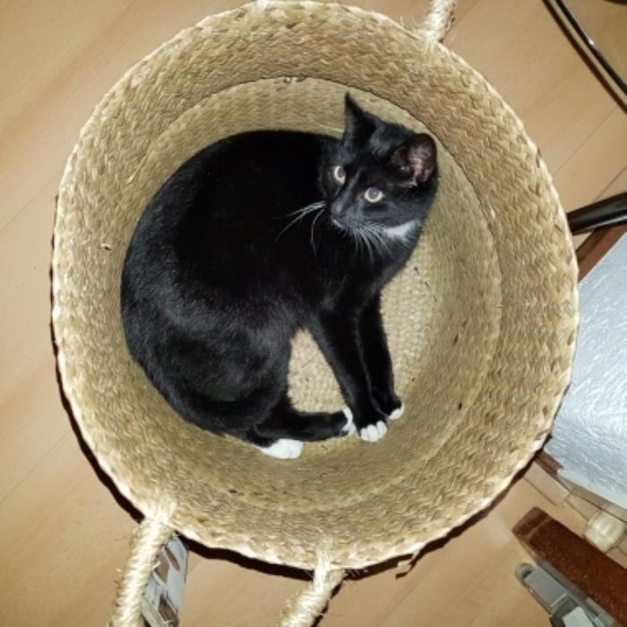 Vermiste kat Beerninkstraat Nijkerk
