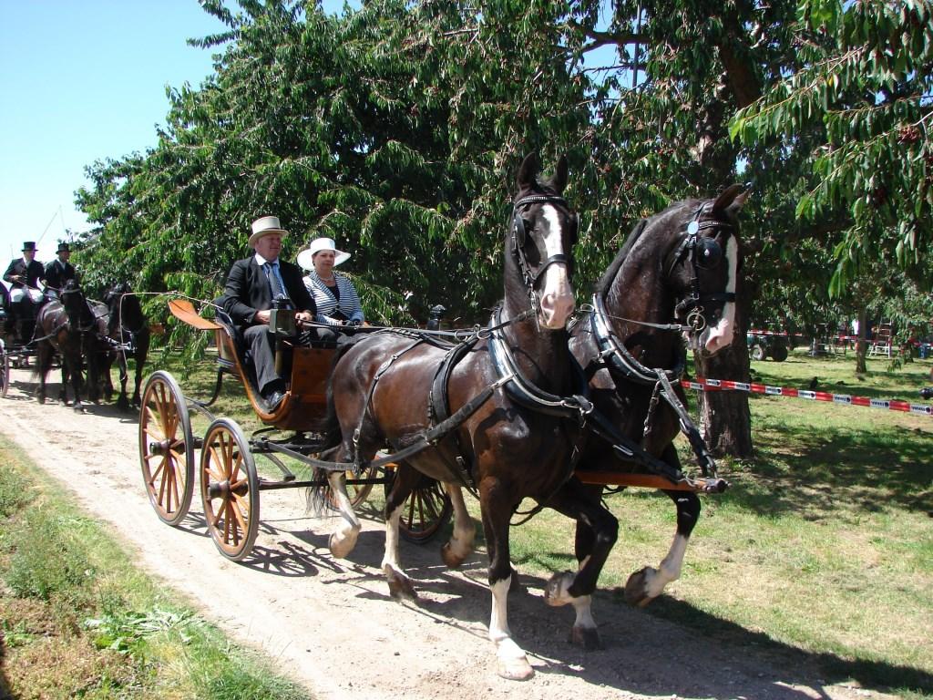Paardenaanspanningen in de boomgaard wes janssen © BDU media