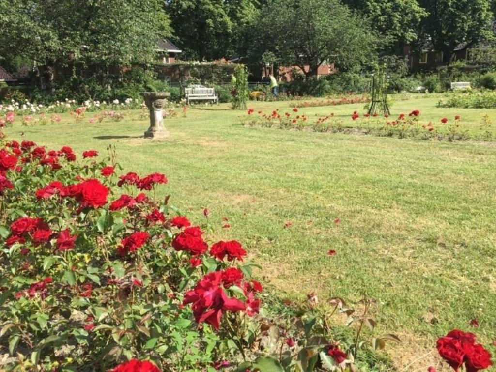 De rozen in het rosarium staan er prachtig bij.