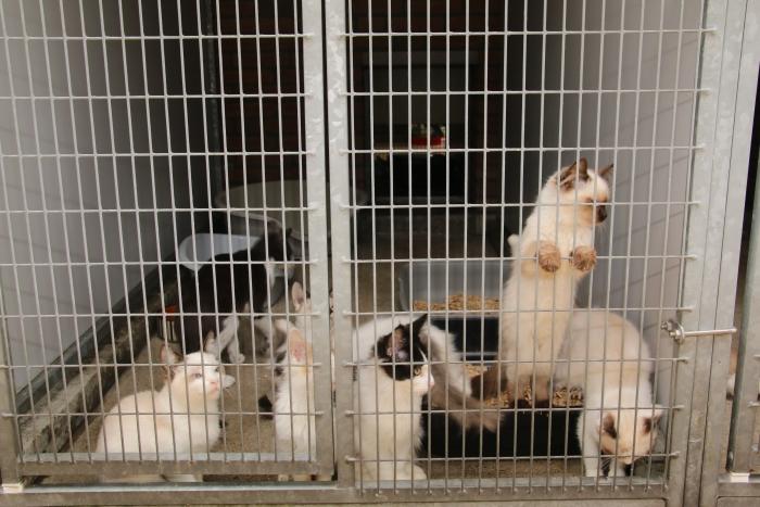 Veel katten wachten op een nieuw baasje.