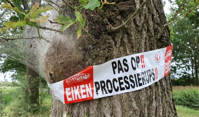 Bomen die aangetast zijn door de iekenprocessierups worden gemarkeerd met een roodwit lint