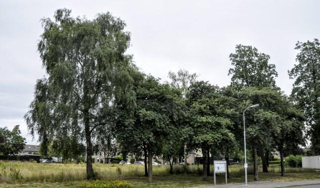 Voor het nieuwbouwplan aan de Wildzoom sneuvelt een aantal waardevolle bomen.