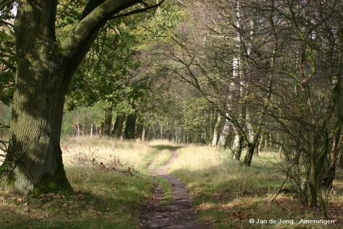 Het Amerongse Bos