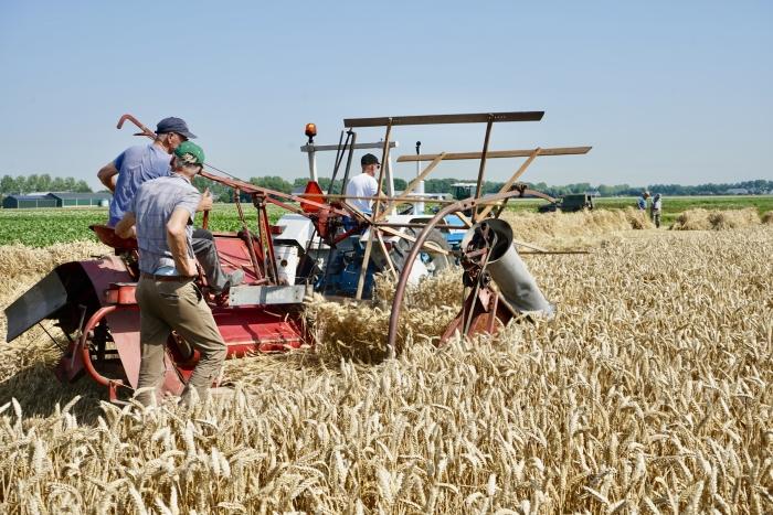 Ouderwets oogsten koren H'meer Antoon van der Graaf © BDU media