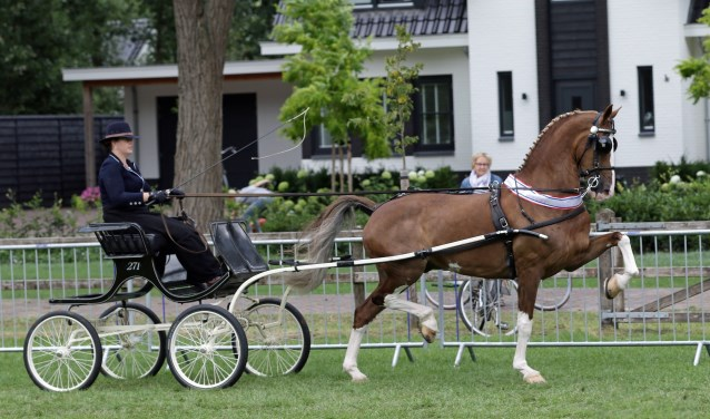 Hanneke van Wessel in actie met 'haar' Briljant W.