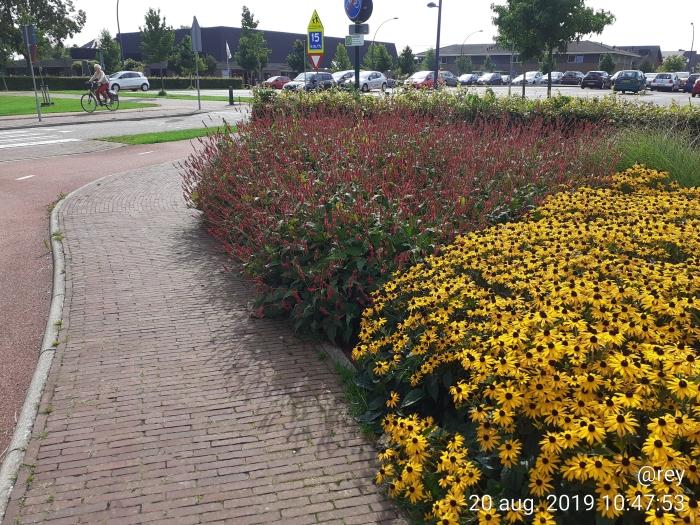 gemeenteplantsoen Roel EIjgenraam © BDU media