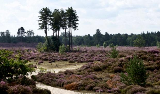 <p>&#39;Blijft Den Treek een bosrijk gebied, aantrekkelijk voor onze regio en ver daarbuiten?&#39;</p>