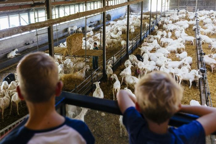 Zicht op 800 geiten Feike Faase © BDU media