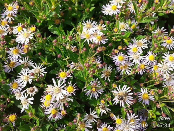Bij die nectar haalt Roel Eijgenraam © BDU media