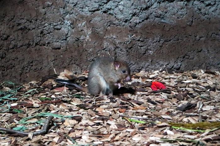 Buidelkonijn DierenPark Amersfoort © BDU media