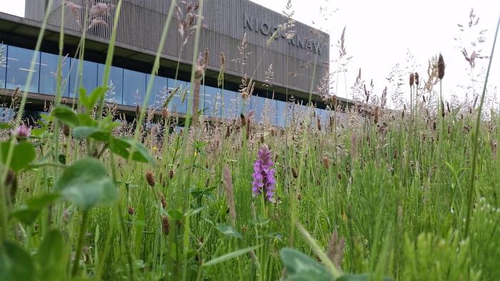 Het bekende duurzame gebouw van het NIOO staat langs de doorgaande weg van Ede naar Wageningen. Froukje Rienks/NIOO-KNAW © BDU Media