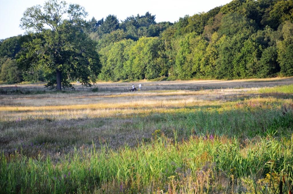 De vlonder in het natuurgebied nabij de Hartenseweg is populair bij wandelaars.  Feike Klomp © BDU Media
