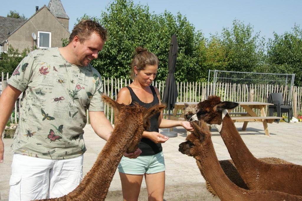 Randy Veldhuizen en Walenka Broskiwiets bij hun Alpaca's Kees Broekman © BDU media